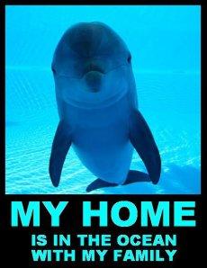 dolphinhome